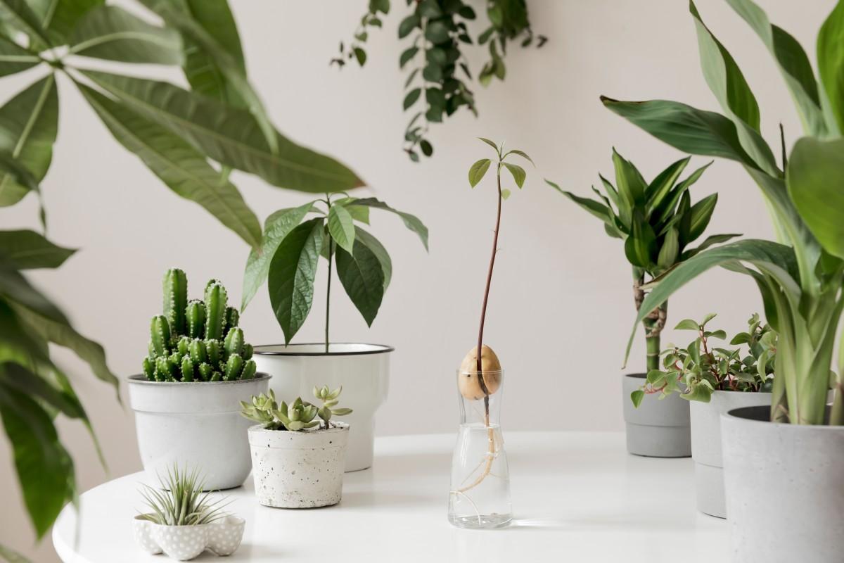 Як кімнатні рослини впливають на психічне здоров'я