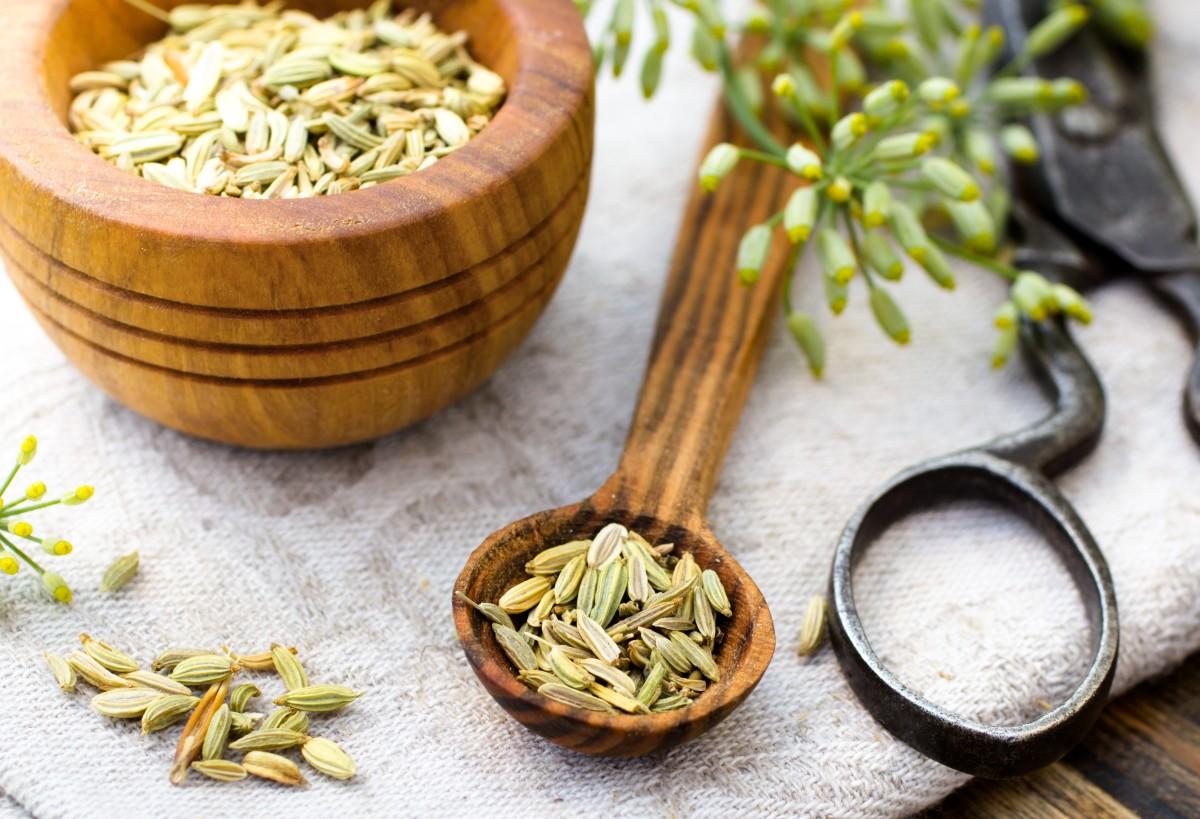 Семена фенхеля: в чем польза и как их применять