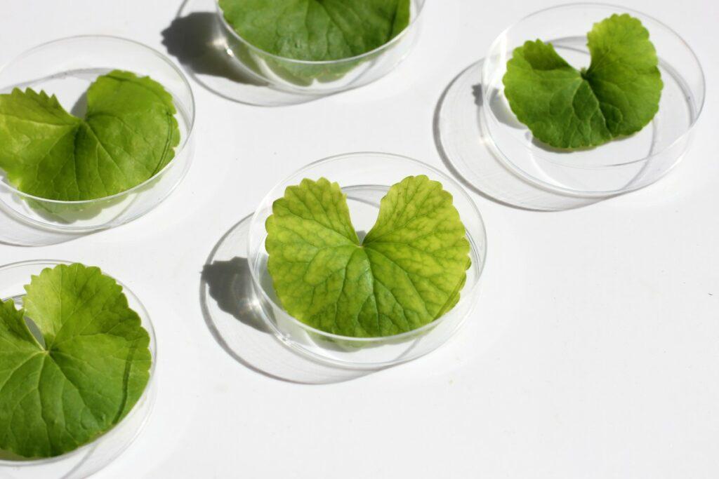 Домашняя маска для лица с центеллой и зеленым чаем