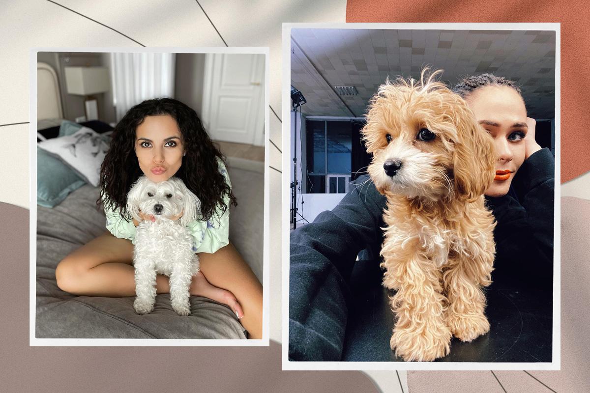 Четвероногие друзья: собаки украинских знаменитостей