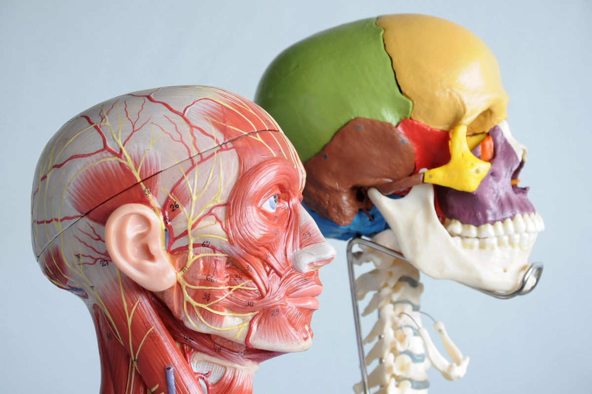Мышцы лица и старение: какая связь и как продлить молодость