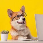 Тест: насколько хорошо вы знаете собак?