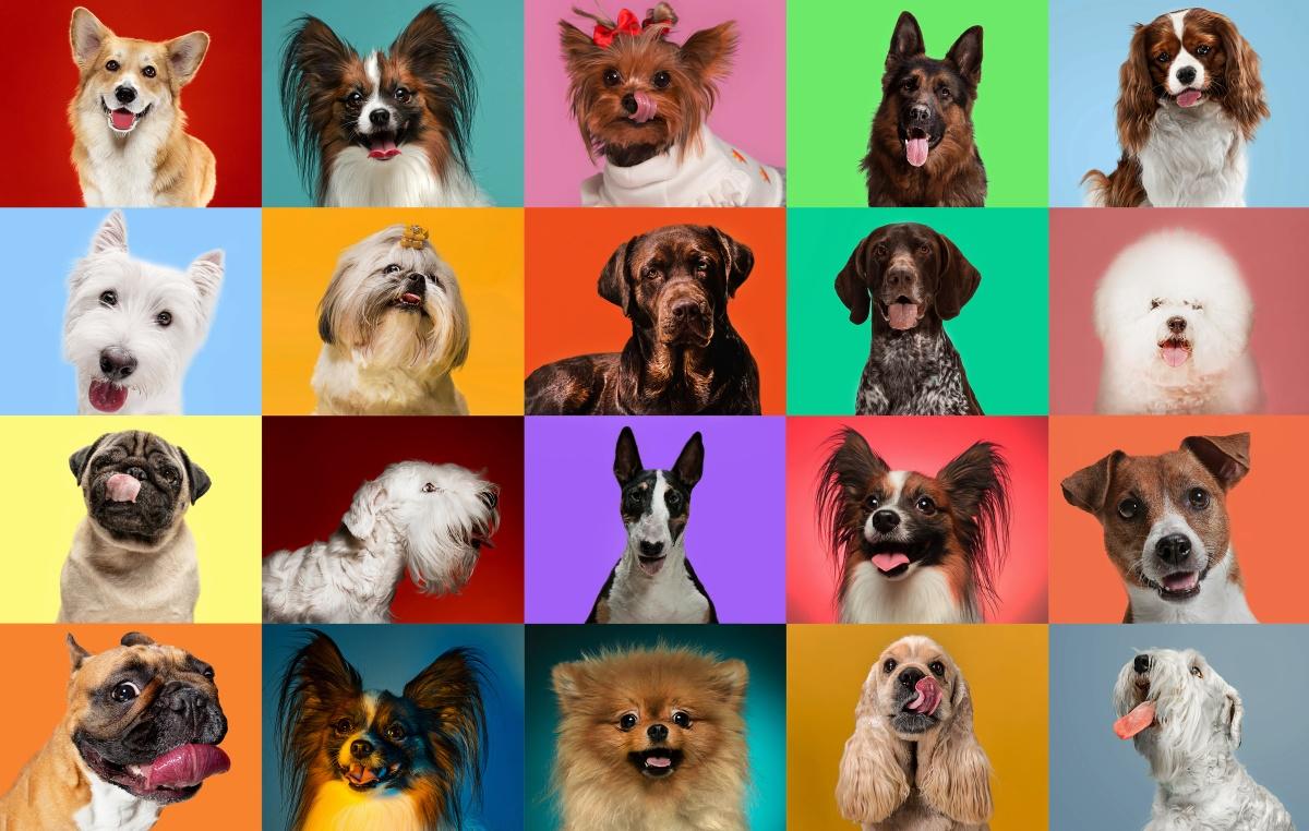 Тест: собакой какой породы вы бы были