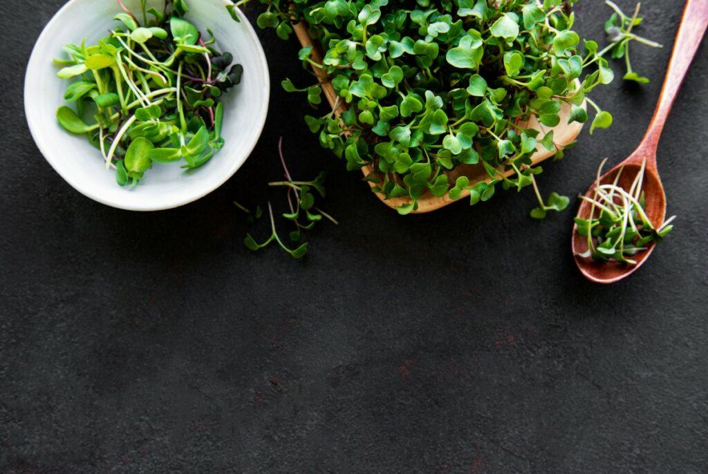 Микрогрин: что это, виды, как выращивать в домашних условиях
